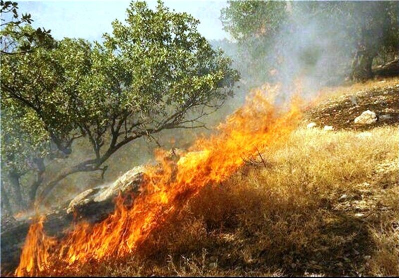 گدازه سرخ آتش بر دامان سبز طبیعت پلدختر/ منابع طبیعی که در خرمن بی تدبیری می سوزد
