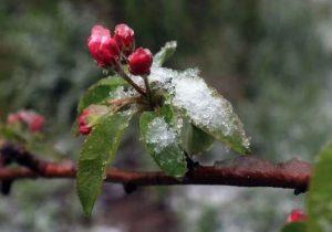 خسارت ۲۰ درصدی سرما به مزارع لرستان/ ۱۲ هزار و ۸۰۰ هکتار از باغات استان آسیب دیدند
