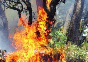 جولان تخریب گران محیط زیست در طبیعت سلسله/ گردوی ۸۰۰ ساله به آتش کشیده شد